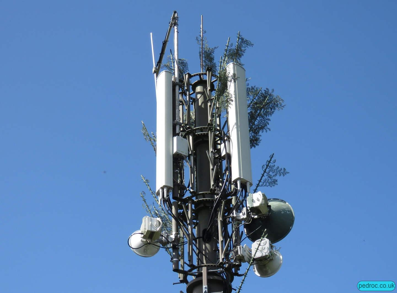 Claughbane Plantation Sure Mast closeup