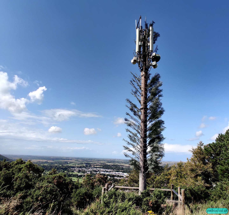 Claughbane Plantation Mast
